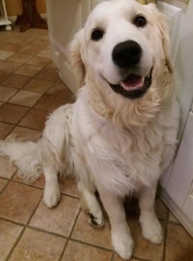 psicoterapia online bambini cane